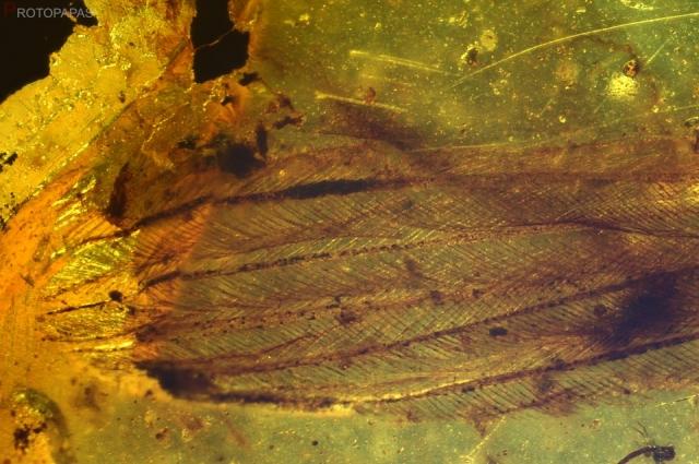 Coelurosaurs feathers in Cretaceous amber Burmite from Myanmar