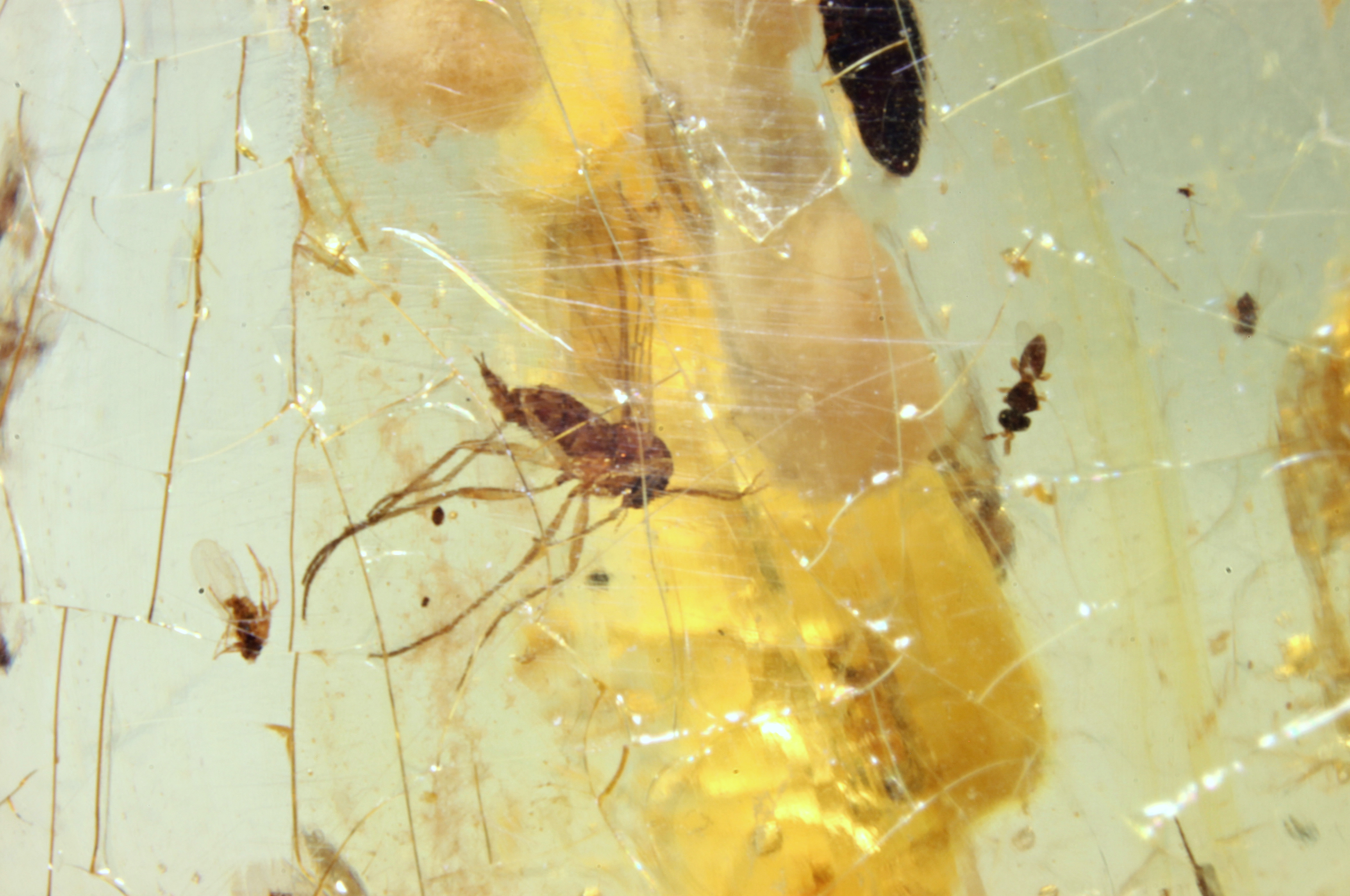 Diptera in Copal from Madagascar