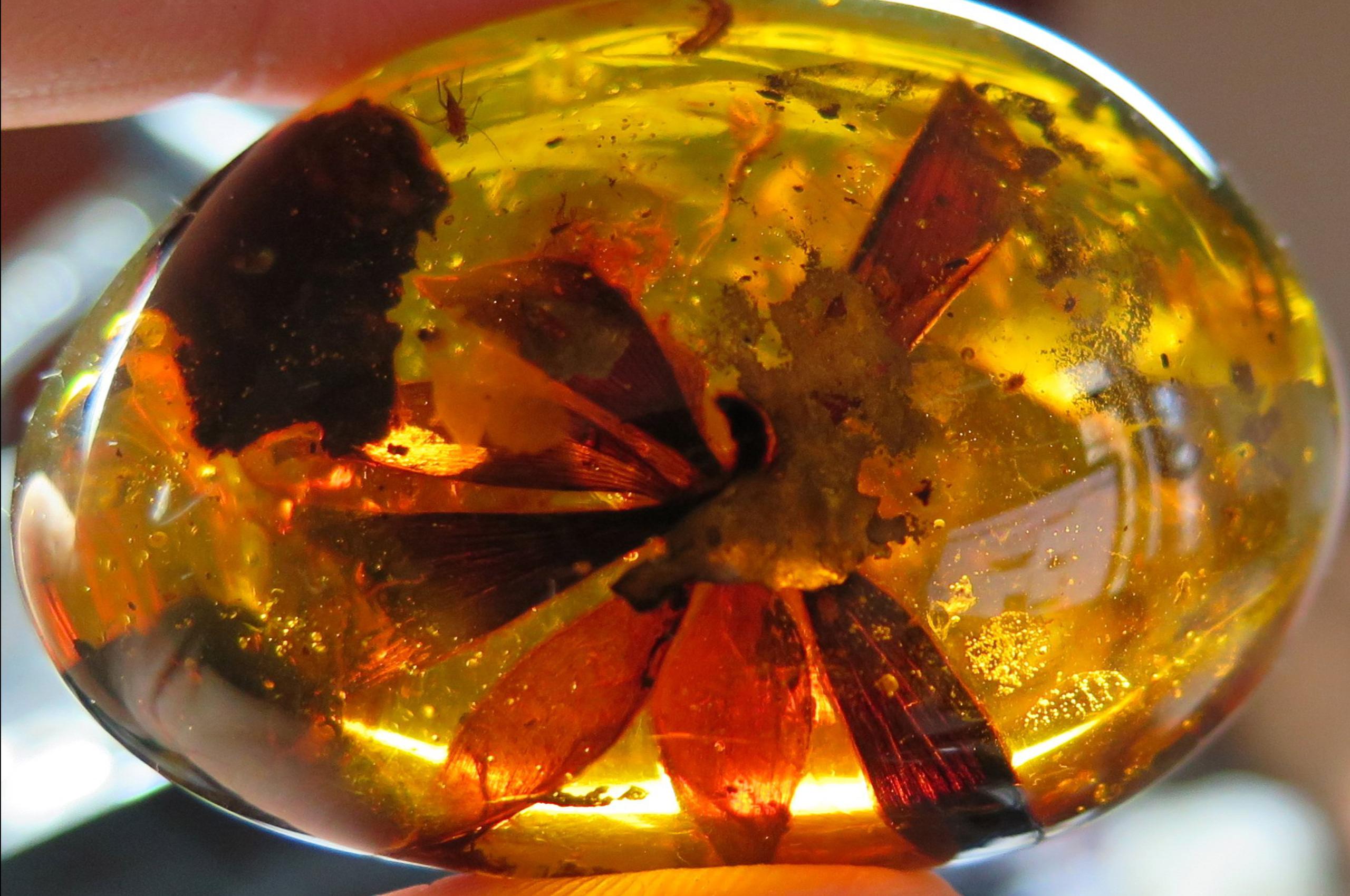 Flower-in-myanmar-amber.-Photo-by-Federico-Barlocher