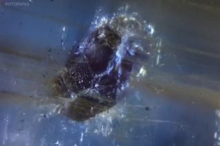 Large crystal included in Kyanite