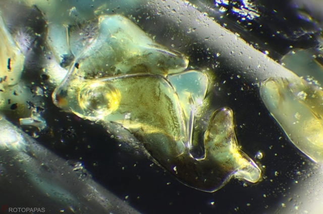 The Shark- Petroleum, solid bitumen and air or water in clear quartz from Pakistan