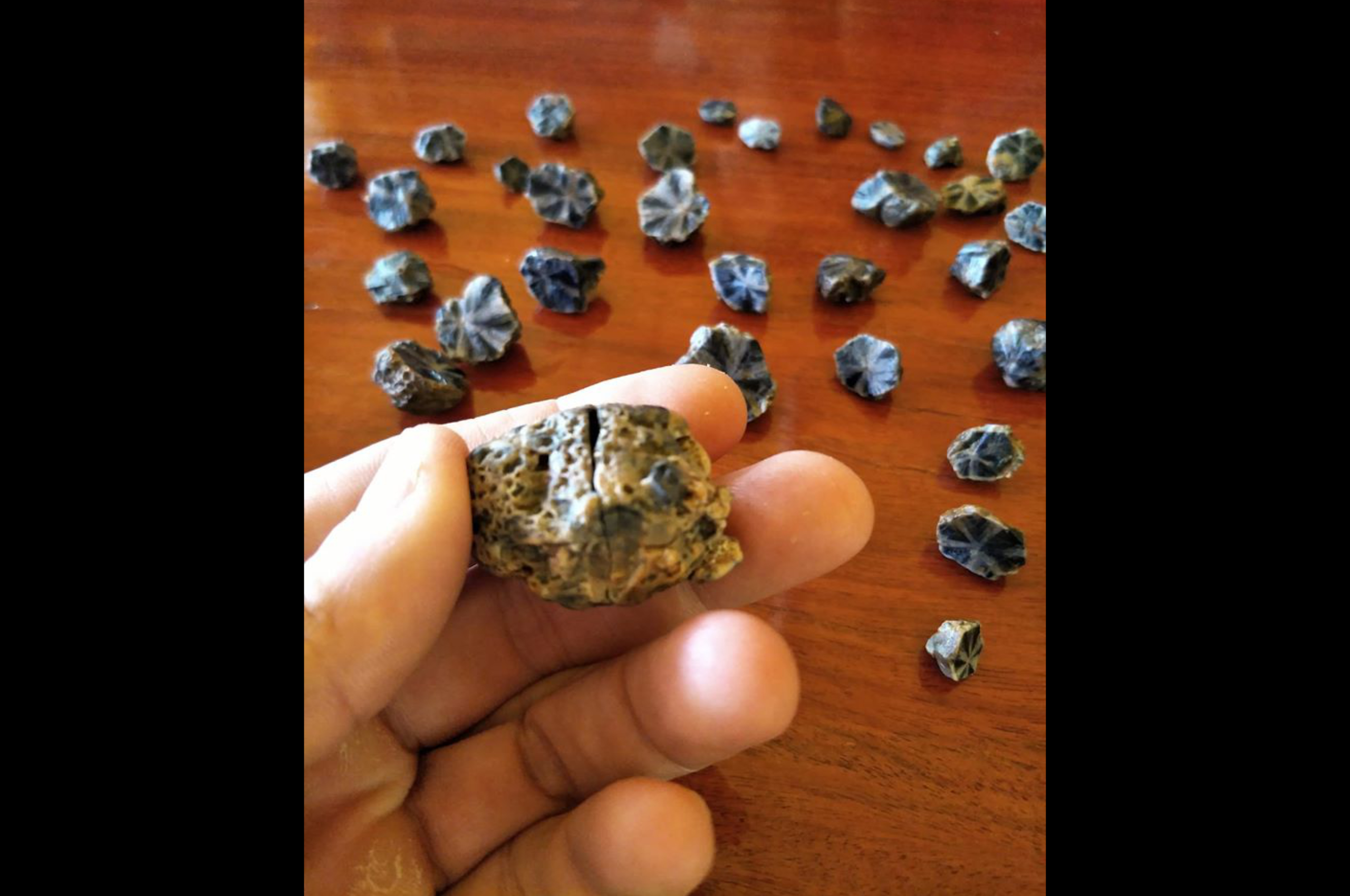 Trapiche-Sapphires-from-Mogok.-Photo-by-Federico-Barlocher