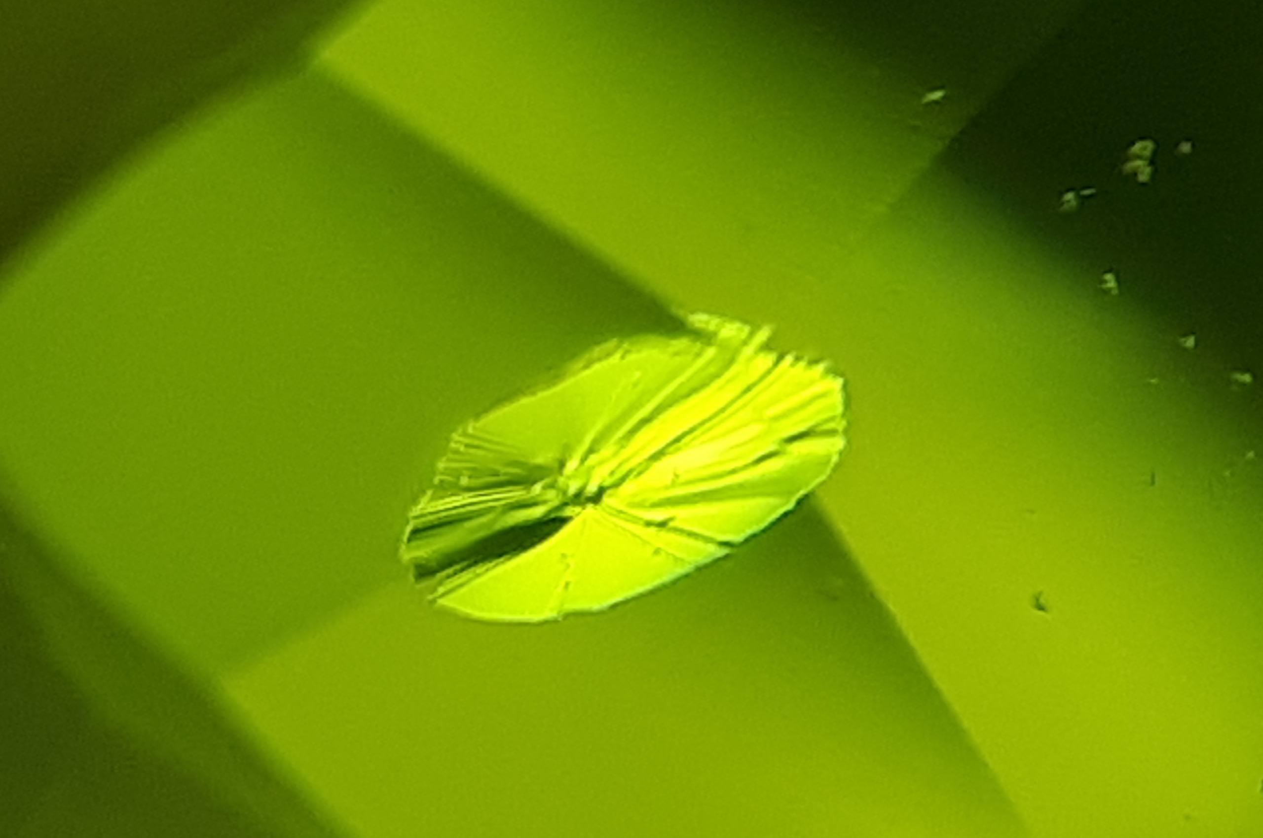 Lily pad inclusion in Peridot - Photo by Igor Bolotovski