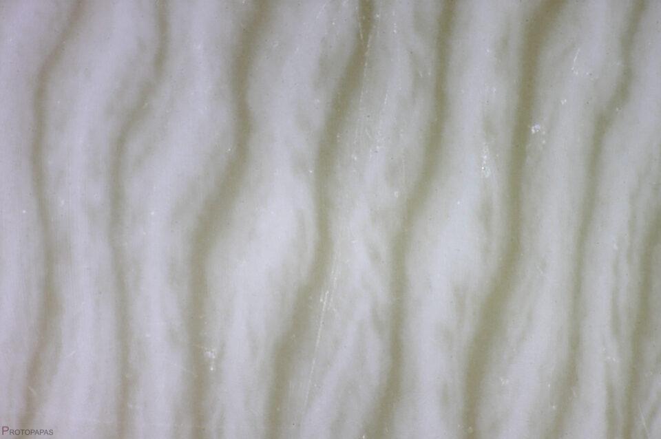 Plastic, imitation of Ivory (longitudinal section). Photo by Protopapas Francesco