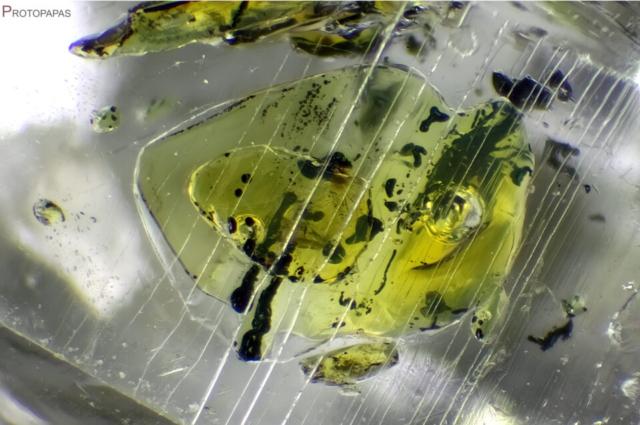 Oil, bitumen, Methane and Water in Petroleun Quartz from Pakistan. Photo by Francesco Protopapas