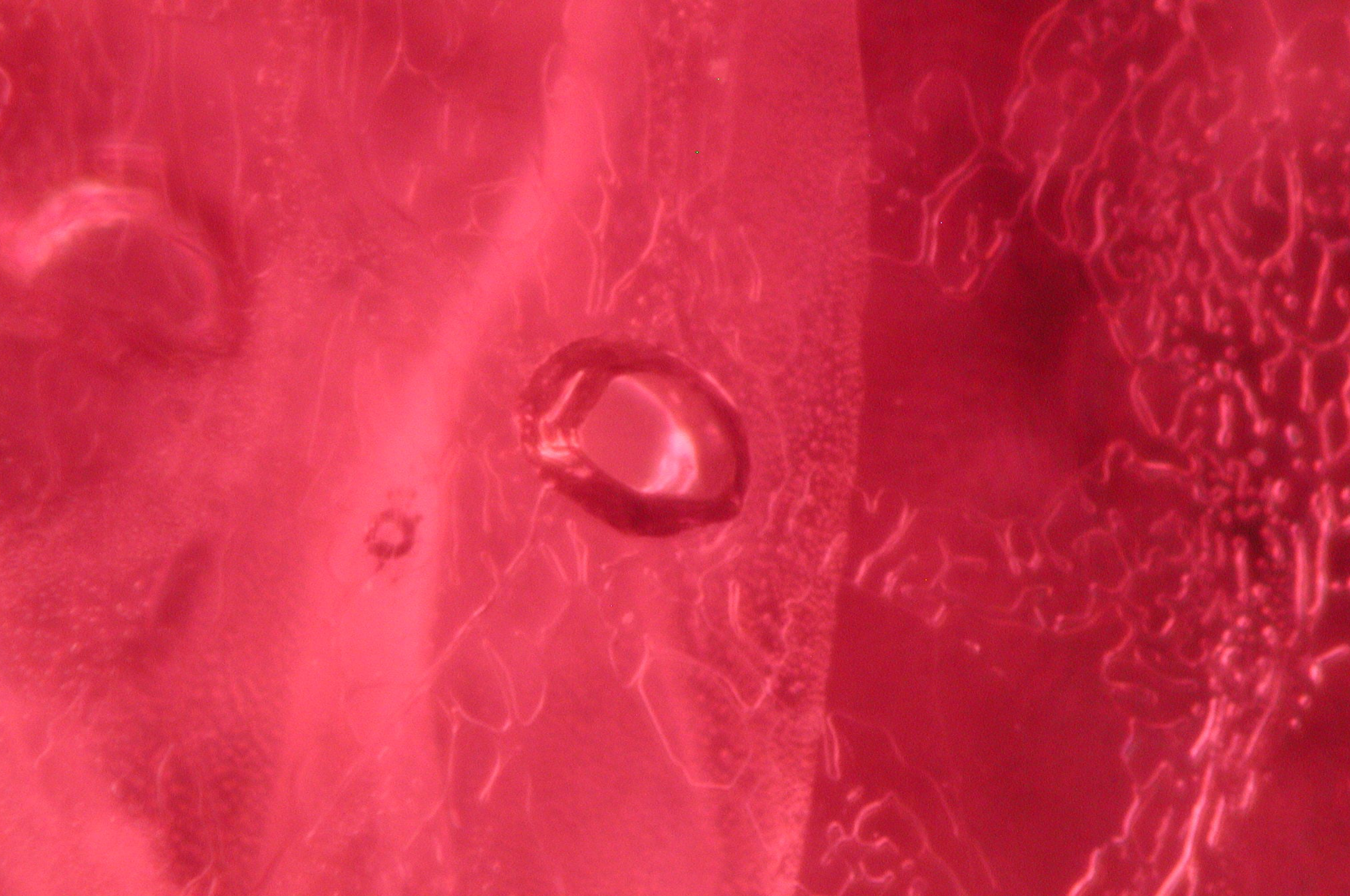 Melted crystal partially heal the halo around it in Ruby from Thailand. Photo by Monica Renna and Salvo Castelli