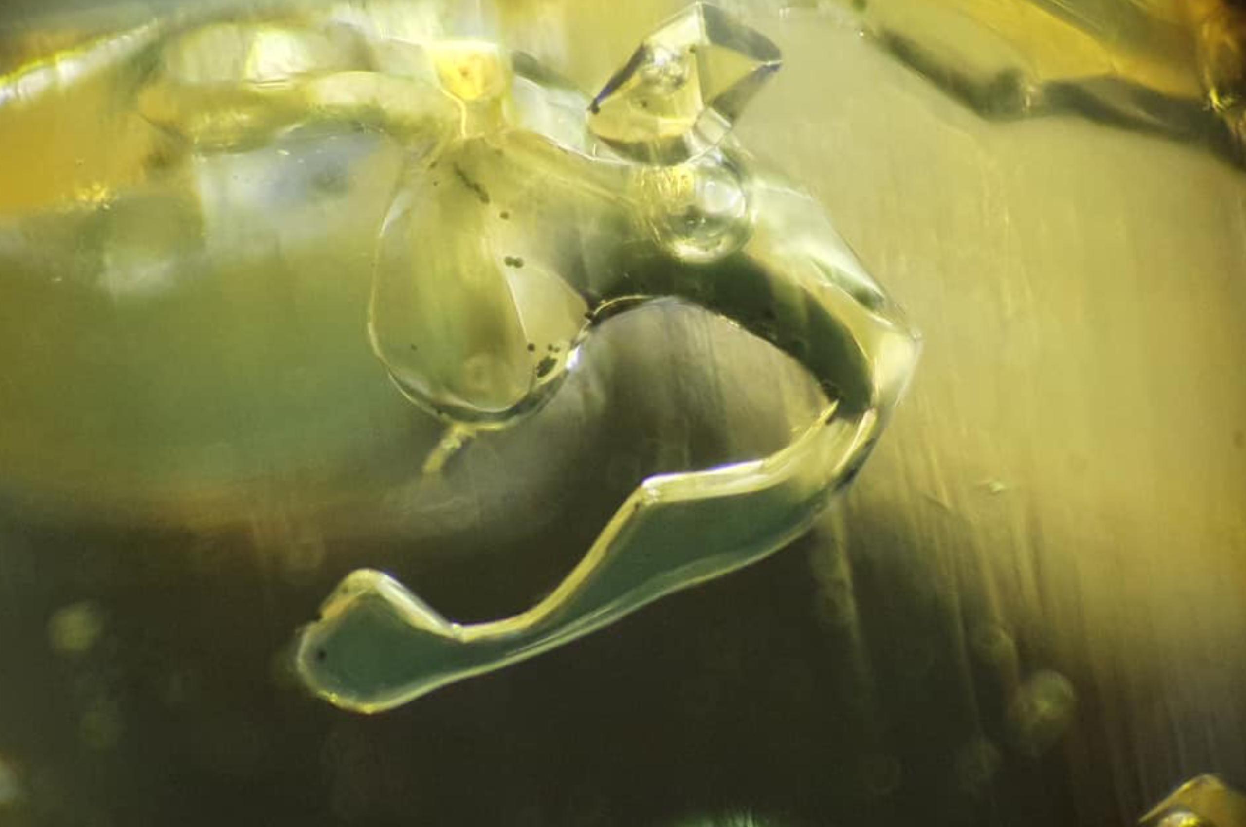 Petroleum, bitumen, Methane and negative crystal in Petroluem quartz. Photo by Gérald Deplus