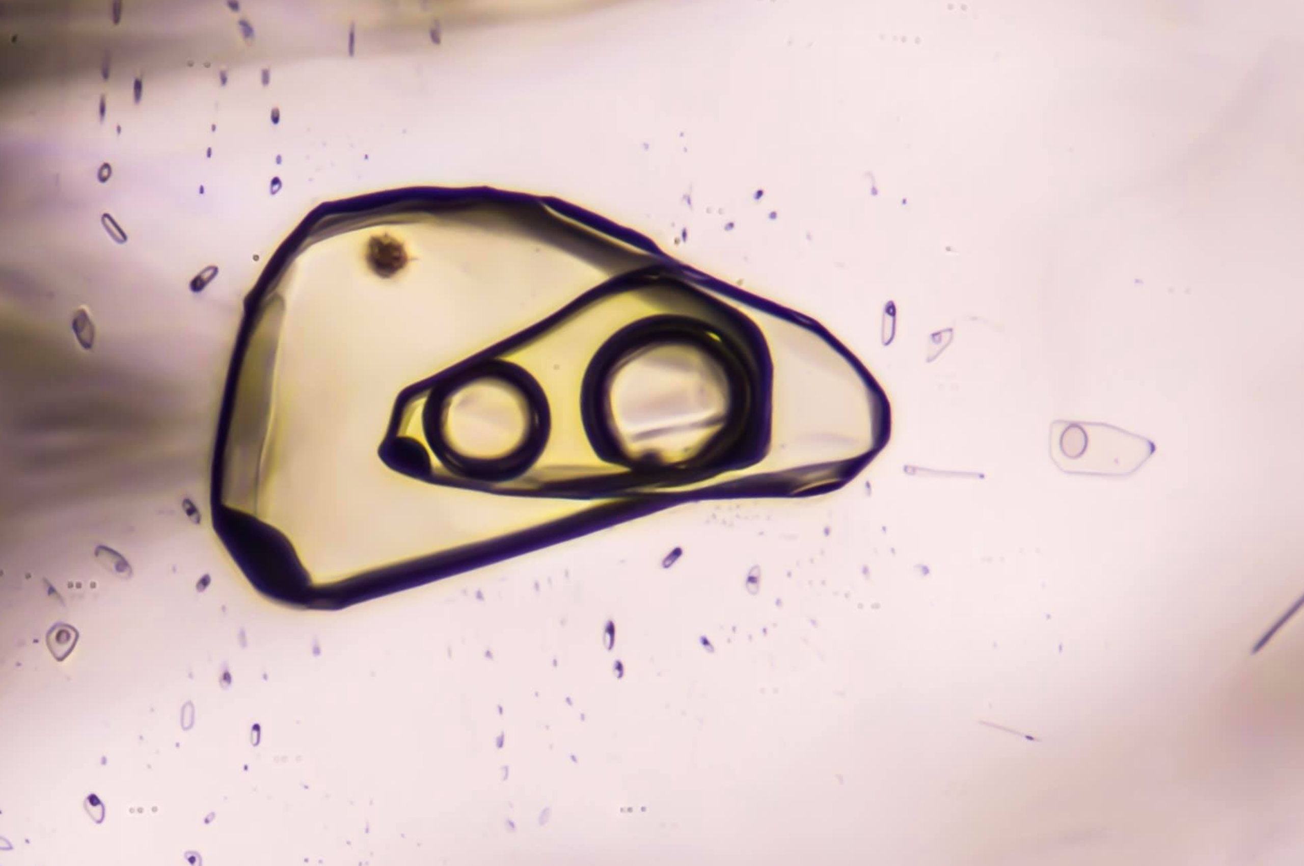 Superposed two-phases inclusions in petroleum quartz from Afghanistan under Polarized filter. Photo by Reginald Greindl