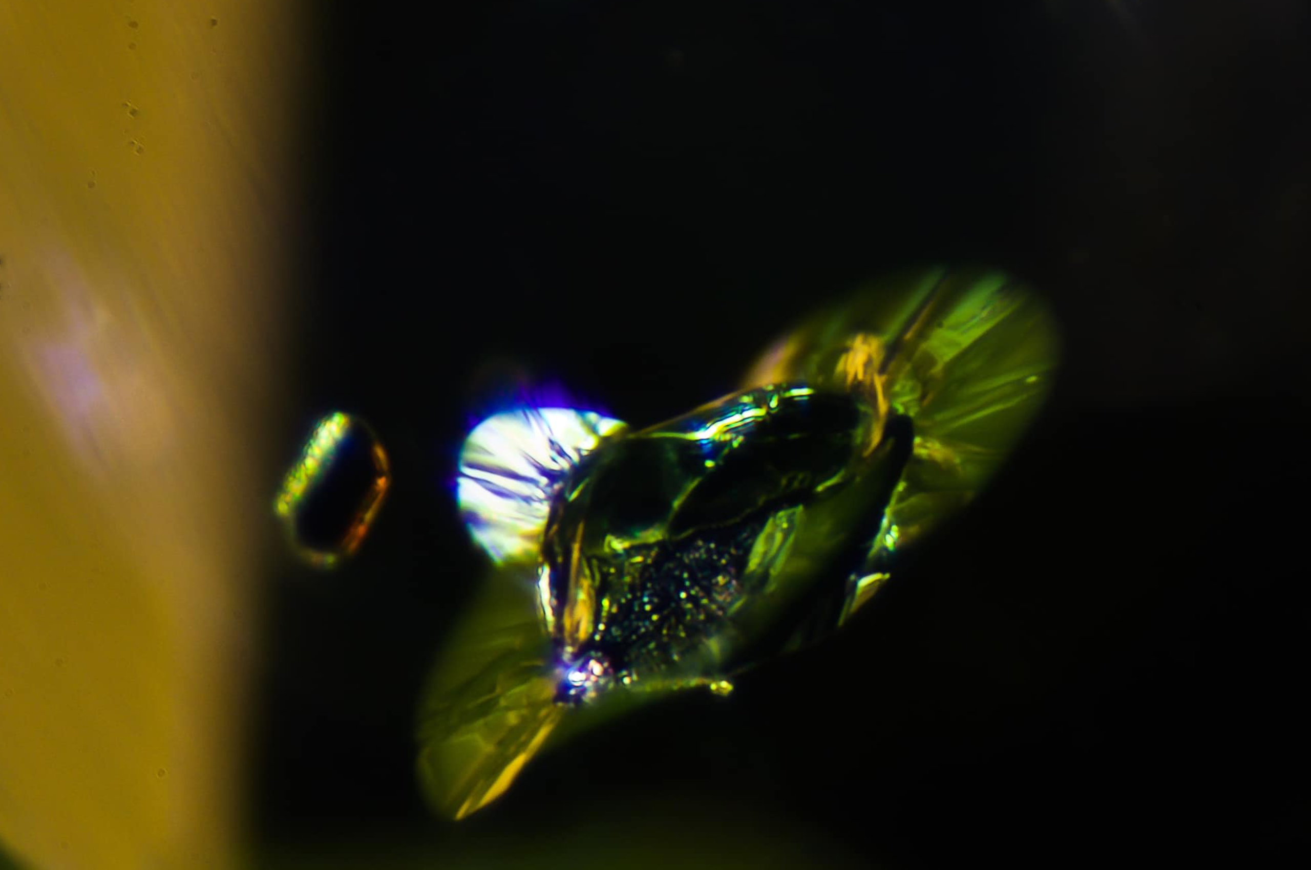 Lilypad inclusion in Peridot. Photo by Reginald Greindl